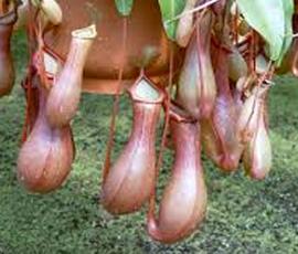 Bugbitingplants Com