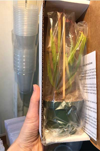Wrapped up Sarracenia in a mailing box.